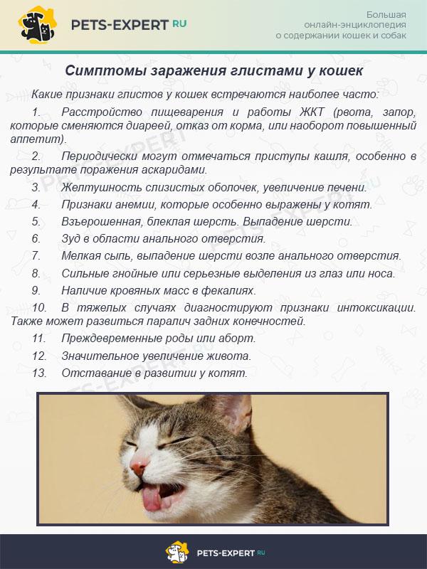 Симптомы заражения глистами у кошек