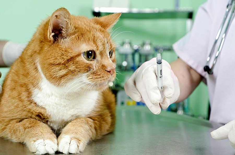 ветеринары склоняются к допустимости обезболивания при тяжелых состояниях питомца