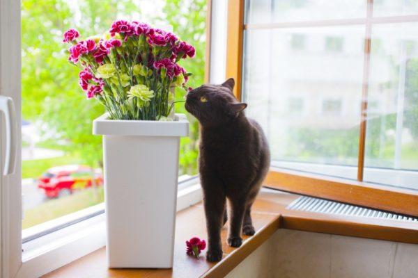 Кошку-аллергика нужно беречь от раздражающих факторов