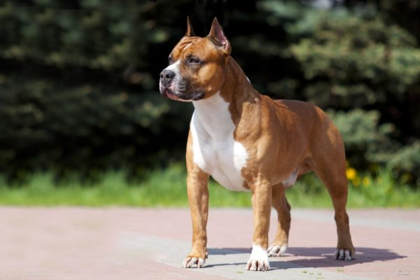 Внешний вид собаки напрямую зависит от качества питания