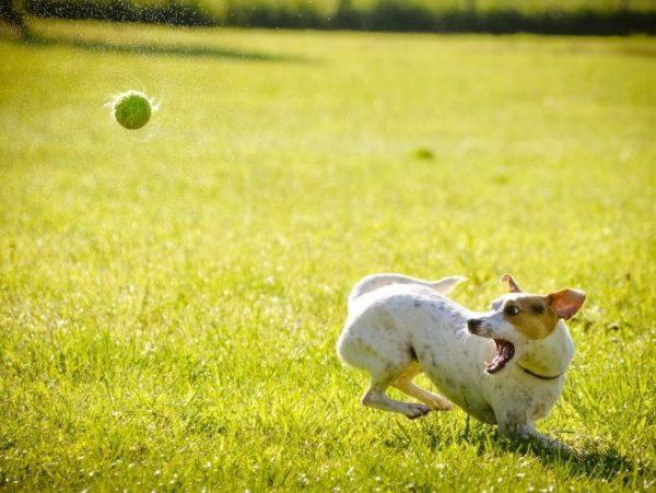 При второй стадии артроза собаке сложно сохранять прежнюю активность
