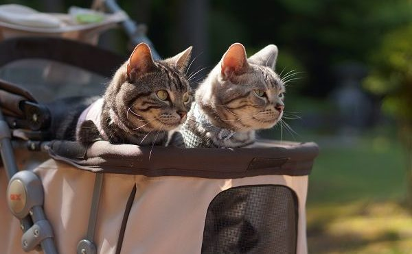 Кошки в специальной прогулочной коляске