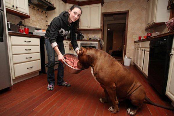 Собака должна жевать мясо, прежде чем проглотить