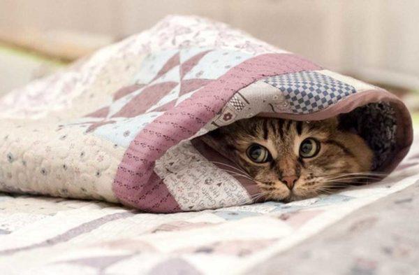 Любая кошка оценит тепло и уют