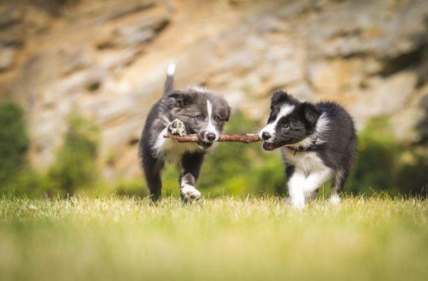 Собака любой породы не должна быть ограничена в прогулках