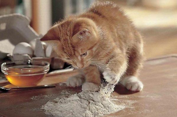 Кошка может кашлять, надышавшись муки или специй