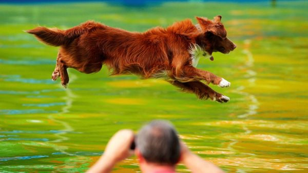 Владельцы собак-спортсменов должны внимательно относиться к здоровью питомца