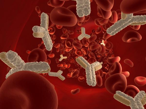 Иммуноглобулины типа «Е» в крови