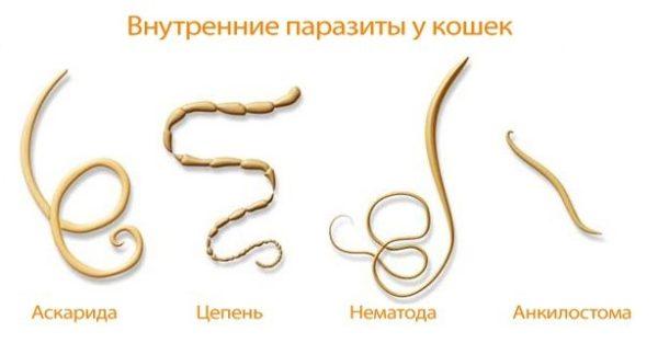 Как выглядят разные паразиты