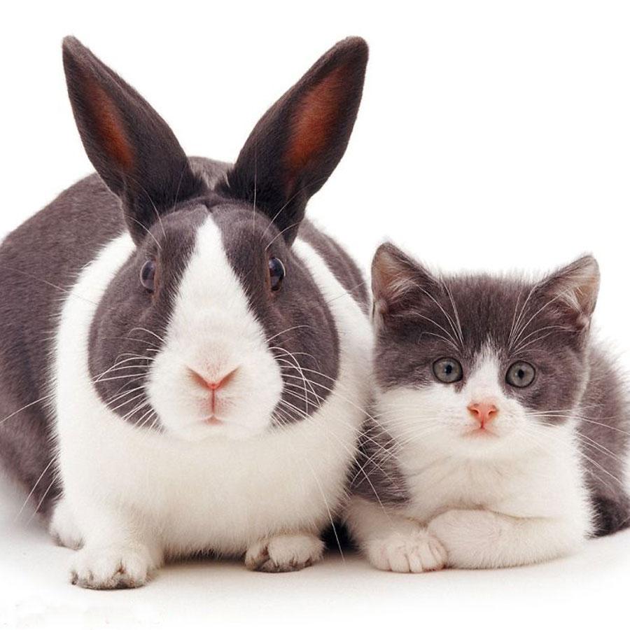Кот и кролик - такие разные и так похожи