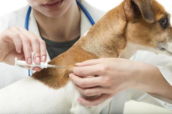 Чипирование является современной альтернативой болезненного клеймирования животных