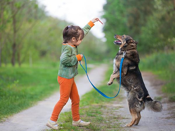 С тренировкой двор-терьера справится даже ребенок, но пока вы не уверены в хорошем поведении пса, оставлять их наедине не стоит