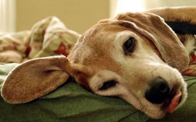 Прививки защищают животных от смертельных инфекций
