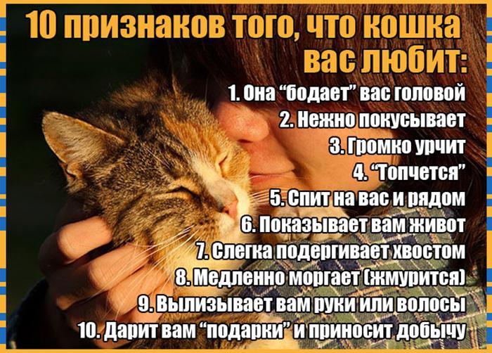 10 признаков кошачьей любви к вам