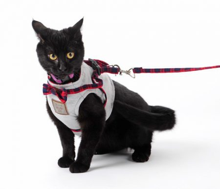 Как выгуливать кошку в шлейке