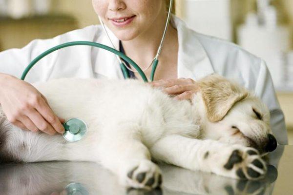 Чем могут быть вызваны изменения в уровне артериального давления собаки?