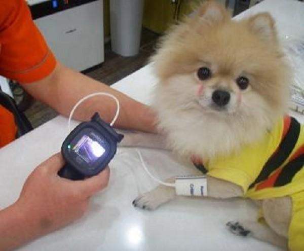 Ветеринарный электрический тонометр весьма удобен для определения давления у собак