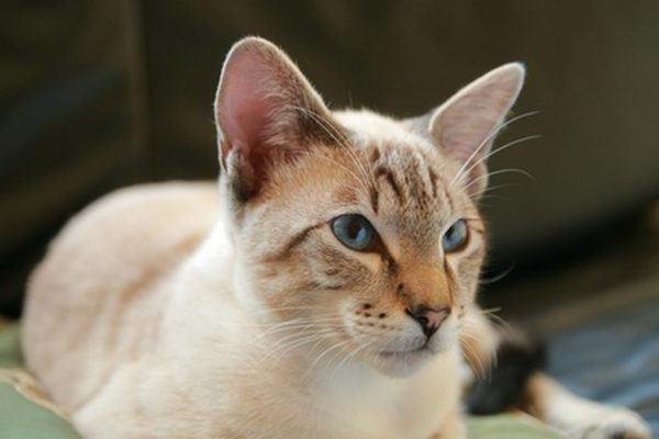Поддержание здоровья кота - обязанность хозяина