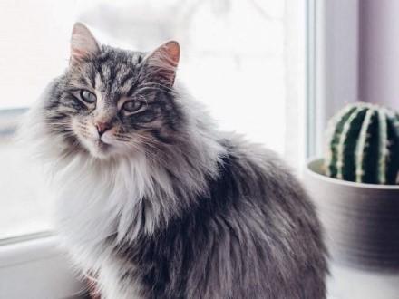 Если кот здоров, то и хозяин счастлив. Не пожалейте денег, и купите своему питомцу необходимо лекарство, тем более, что стоит оно вполне приемлемо