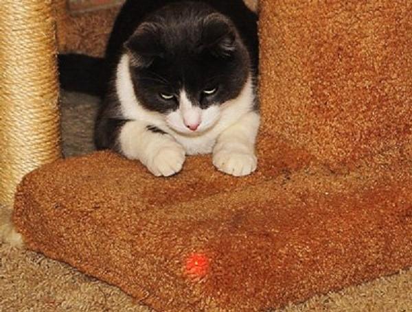 Если кошка не играет с лазером, скорее всего у нее имеются проблемы со зрением