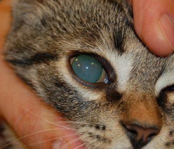 Чтобы животное не испытывало неприятные ощущения, оно получает предварительную местную анестезию
