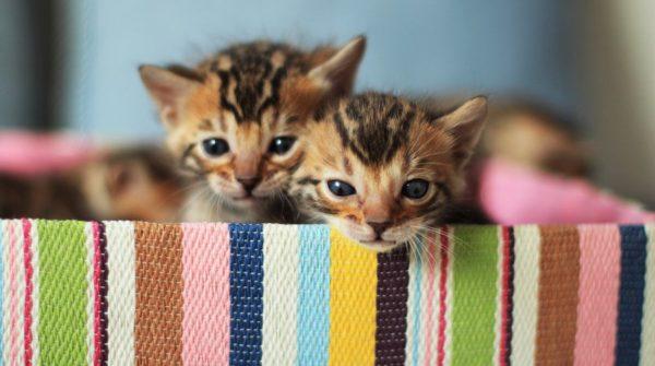 Ветеринары часто заявляют, что данный недуг является характерным, как правило, для представителей определенных пород или метисов