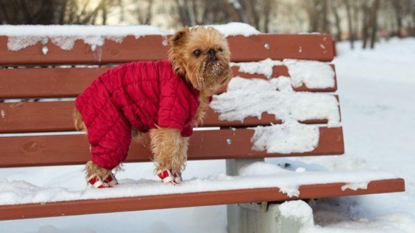 Зимой собаку можно одевать