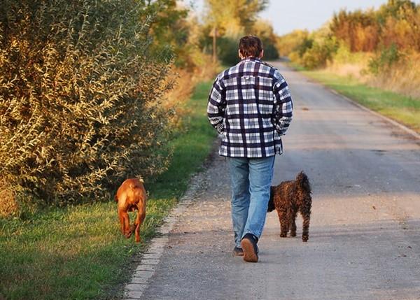 Профилактические меры позволят вам предотвратить развитие у собаки болезни, обусловившей повышение уровня интересующего нас фермента в крови собаки