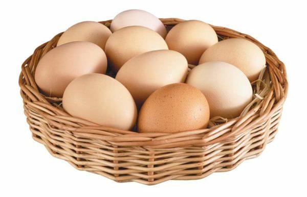 Яйца можно давать чихуахуа 2 раза в неделю