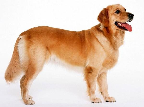 Тело собаки - система взаимосвязанных элементов