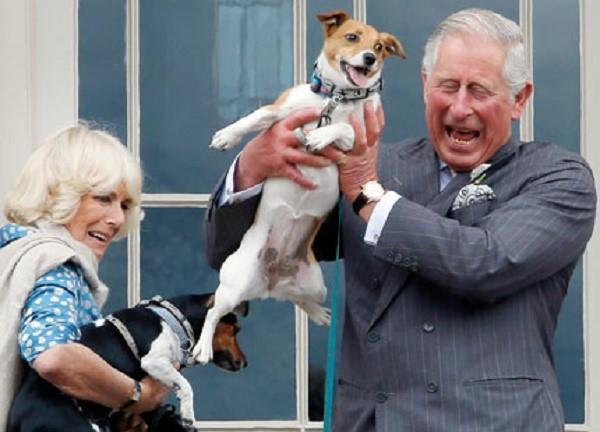 Британский наследник престола, принц Чарльз, является поклонником этой породы собак