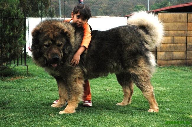 Базой для дрессировки является полный контакт между хозяином и собакой
