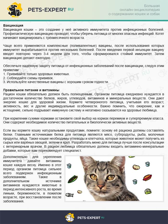 2 способа поднять иммунитет кошке