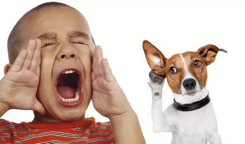 Как приучить собаку к кличке?