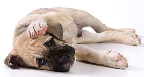 От аллергии страдают собаки всех пород и возрастов