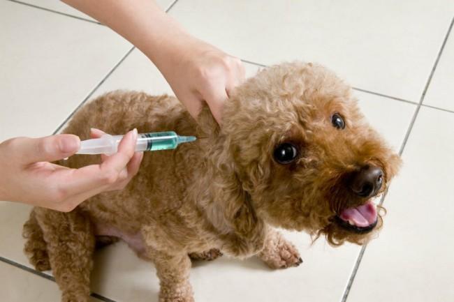 Что представляет собой профилактическое средство «Эурикан» для собак, и как правильно его использовать?