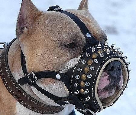 Как приучить собаку к наморднику с наименьшими усилиями?