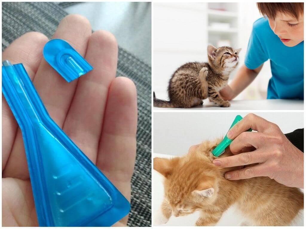 Обработка кошки каплями