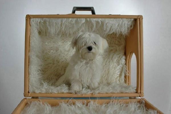 К крышке чемодана можно добавить ткань, которая будет служить навесом