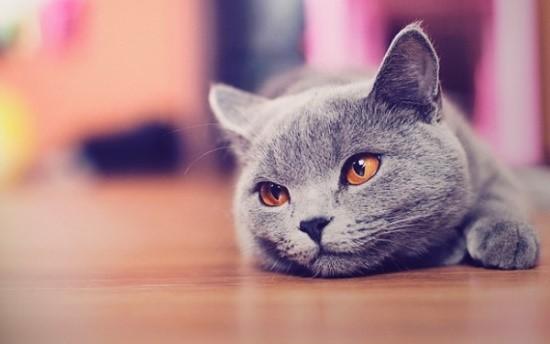Здоровье кошки - ответственность хозяина