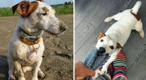 Активность этих собак зашкаливает: на прогулку необходимо брать игрушку или же готовиться к тому, что придется хорошенько побегать за питомцем