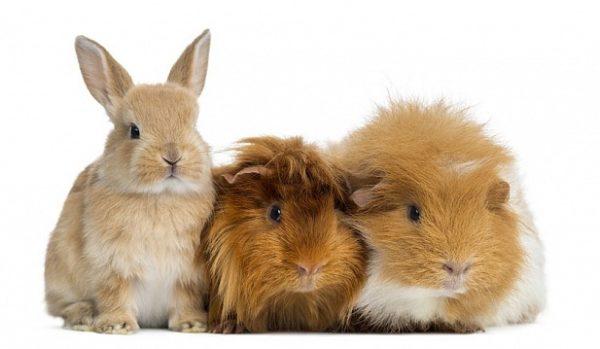 Лекарство успешно используется как для лечения кошек и собак, так и для помощи домашним декоративным грызунам