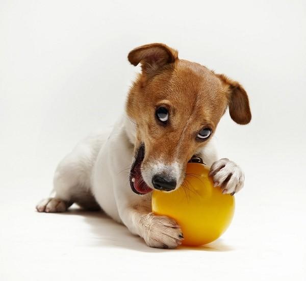 При адекватном подходе общение с собакой будет приносить вам одно удовольствие