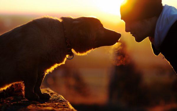 Зудневая чесотка не передается от собаки к человеку