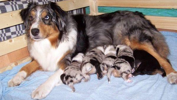 Поведение матери также принимают во внимание