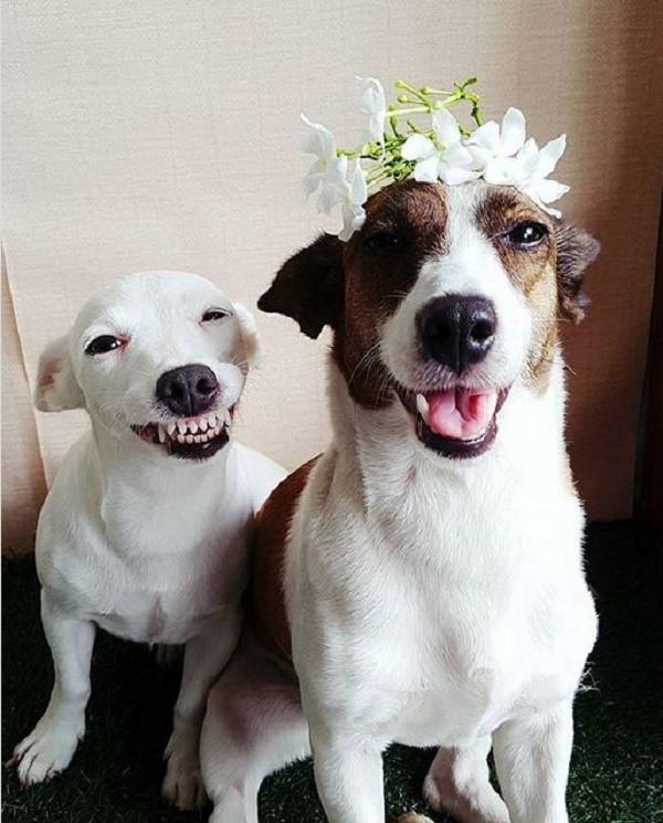 Эти собаки очаровательны