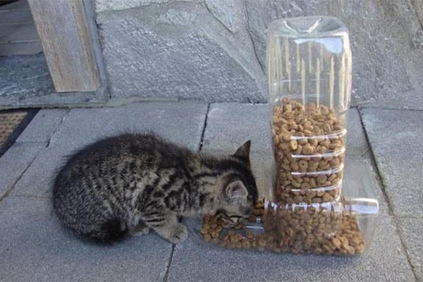 Автоматическую кормушку для кошек можно не только купить за большие деньги, но и сделать своими руками за сущие копейки