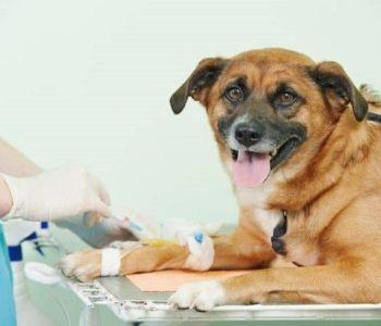 Что может явиться причиной для повышения уровня интересующего нас фермента в организме собаки?