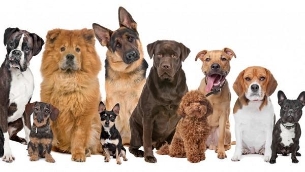 """""""Правильного"""" давления у собак нет, его величина будет варьироваться в зависимости от того, каковы размер, половая принадлежность собаки и иные, оказывающие влияние, факторы"""
