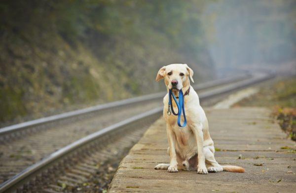 Чипирование значительно увеличивает шансы на возвращение собаки хозяину